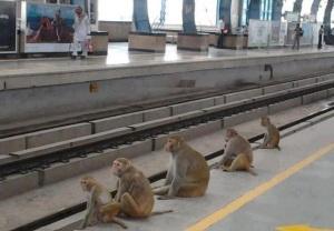 monkey platform